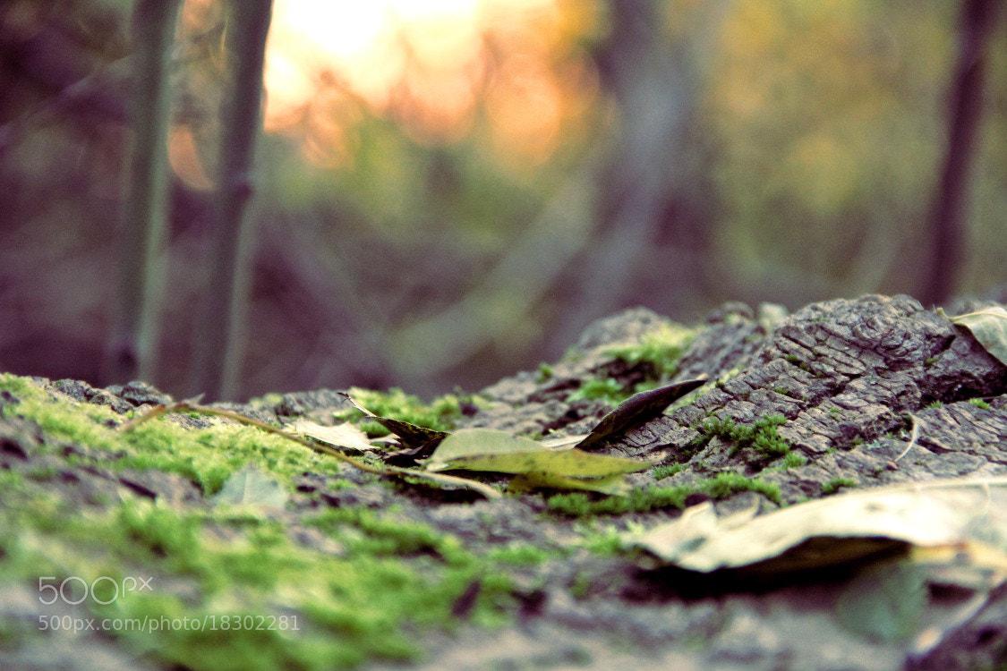 Photograph Autumn Wood by Matthias Zirnig on 500px