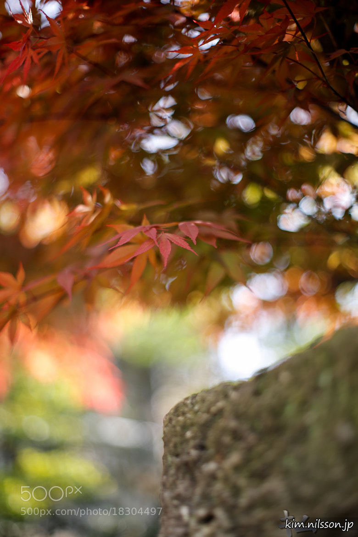Photograph Autumn Colors by Kim Nilsson on 500px