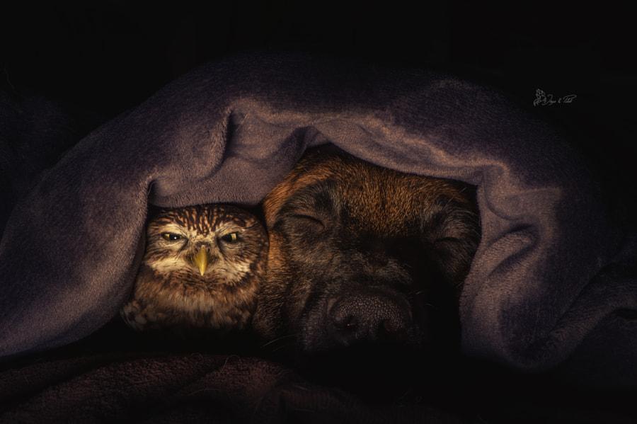 Dreams, автор — Tanja Brandt на 500px.com