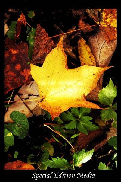 Photograph leaves by Erin Brooke on 500px