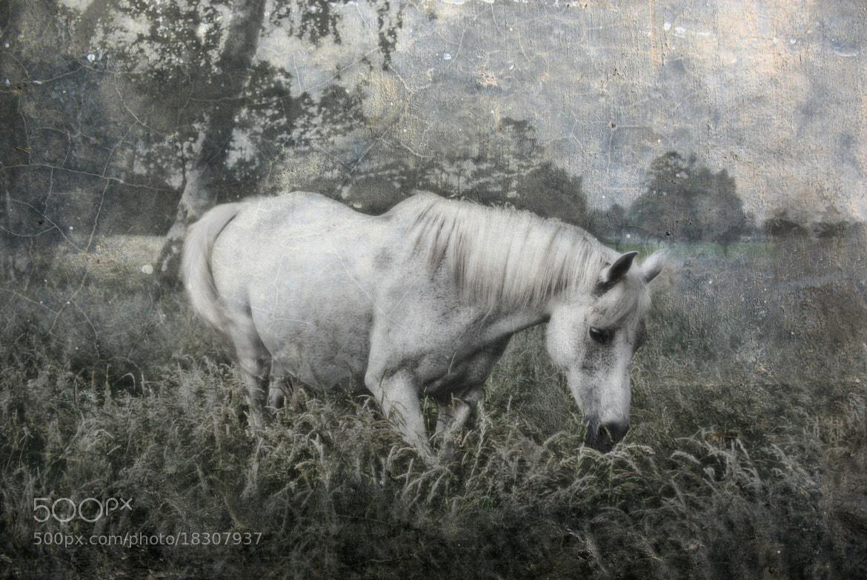Photograph magical Arab by Joachim G.  Pinkawa on 500px