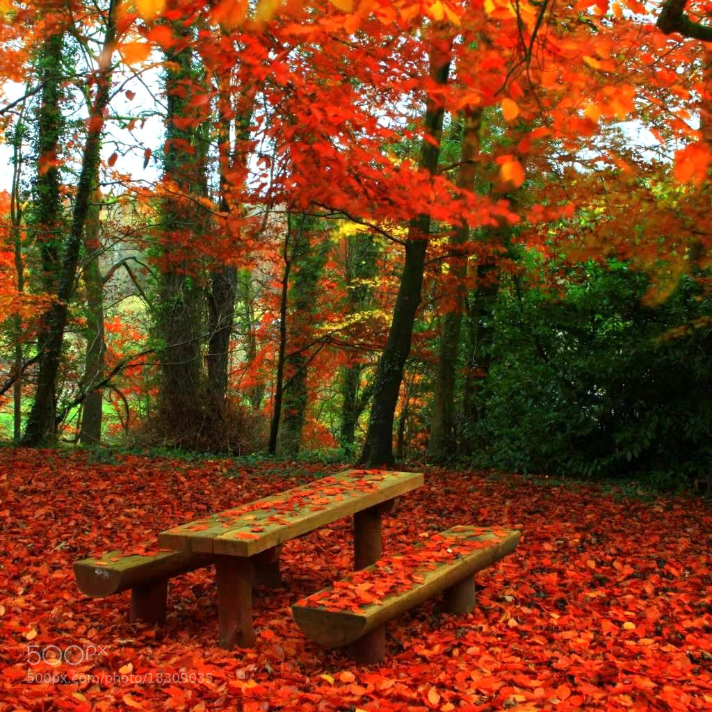 Photograph Autumn. by EDWARD DULLARD on 500px