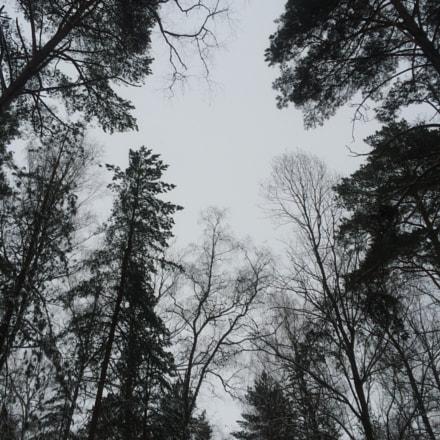 Nature pattern.
