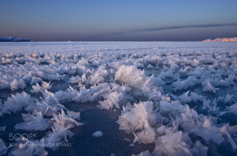 Photograph Ice Crystals by Sten Wiklund on 500px