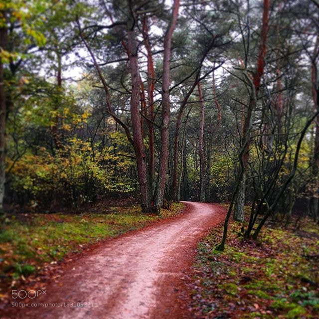 Autumn in the Forest by joost10