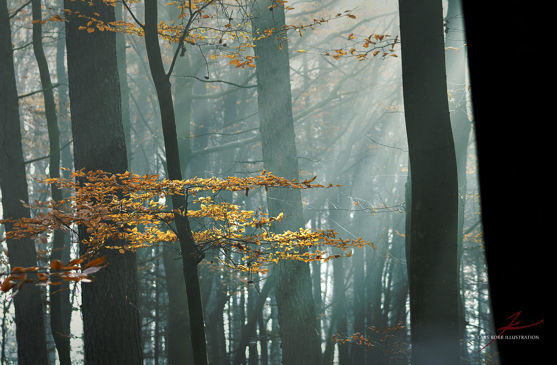 Photograph Foggy November Forest by Lars Korb on 500px