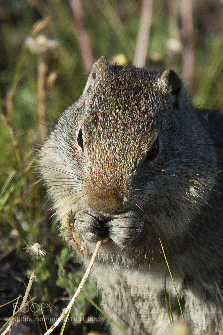 Photograph Munching Away by Larry Flynn on 500px