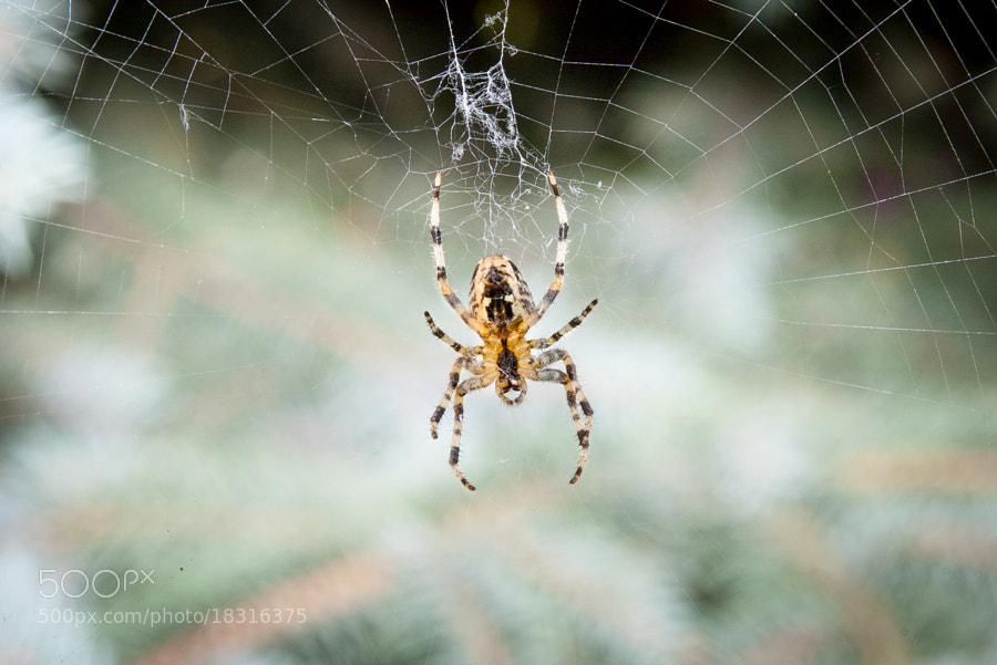 Photograph Spider by Michał Sleczek on 500px