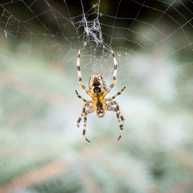 Spider by Michał Sleczek (telepatic)) on 500px.com