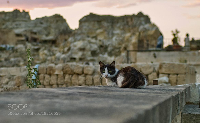 Photograph Cat at Temenni by Mehmet Kutlu İNANÇ on 500px