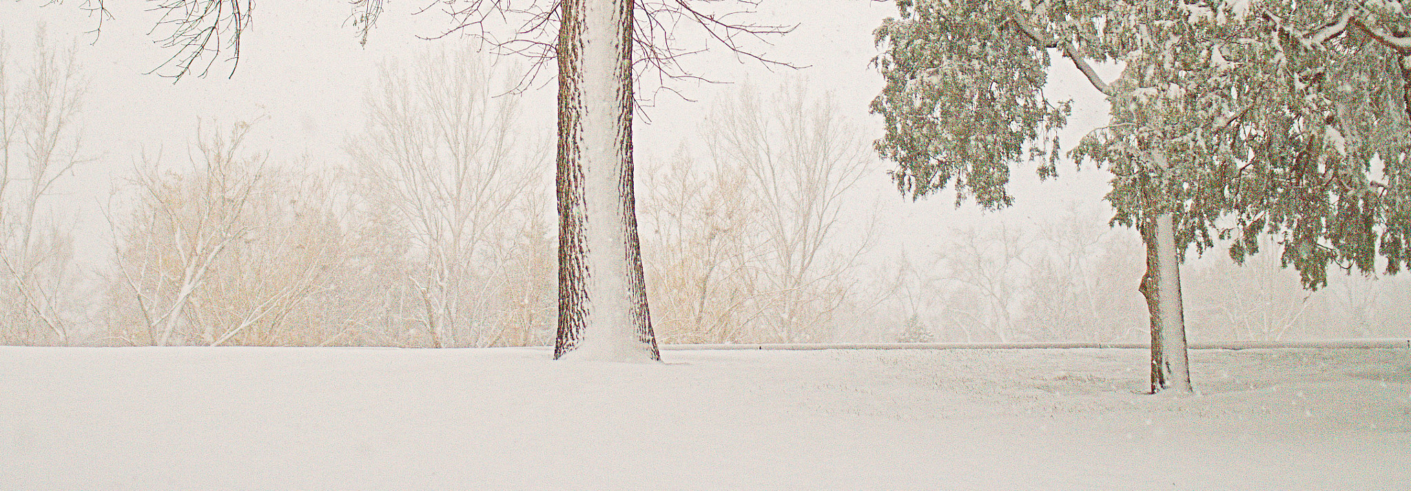 Photograph Tree Snow by Johnny Gomez on 500px