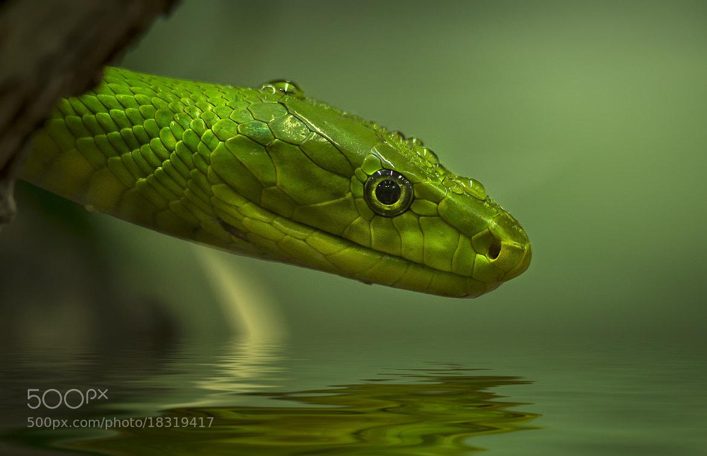 Photograph snake by Detlef Knapp on 500px