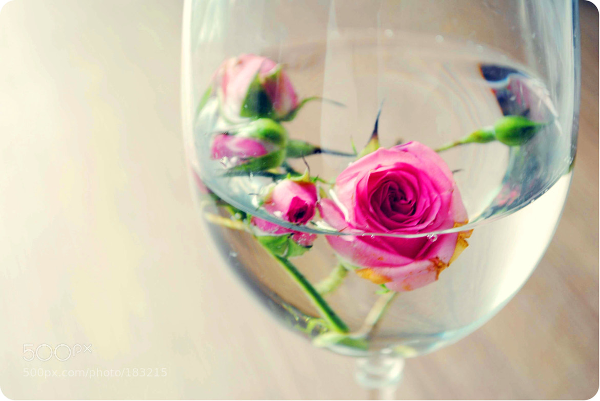 Photograph Roses by Strawberry Mood on 500px