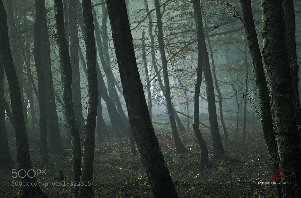 Photograph Witch Forest 1 by Lars Korb on 500px
