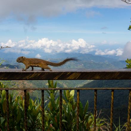 Kinabalu Park, Ranau, Sabah