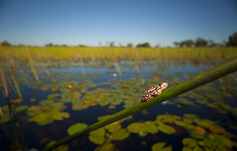 Photograph Reed Frog by Neil Aldridge on 500px