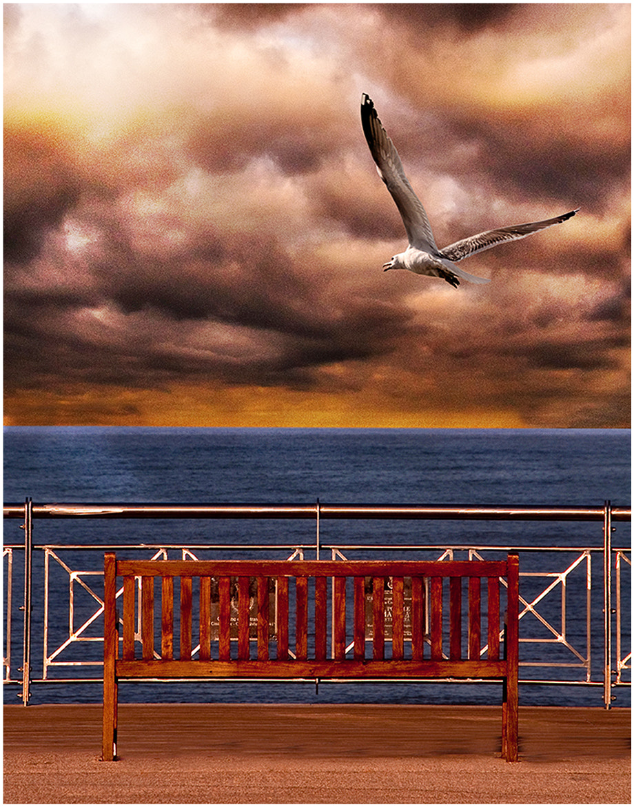 Photograph The Seagull by Roberto Paglianti on 500px
