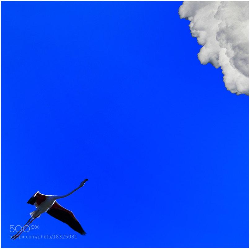 Photograph Volare by Roberto Paglianti on 500px