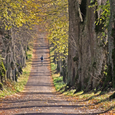 Jogging Between Lime Trees, Sony DSC-HX5V