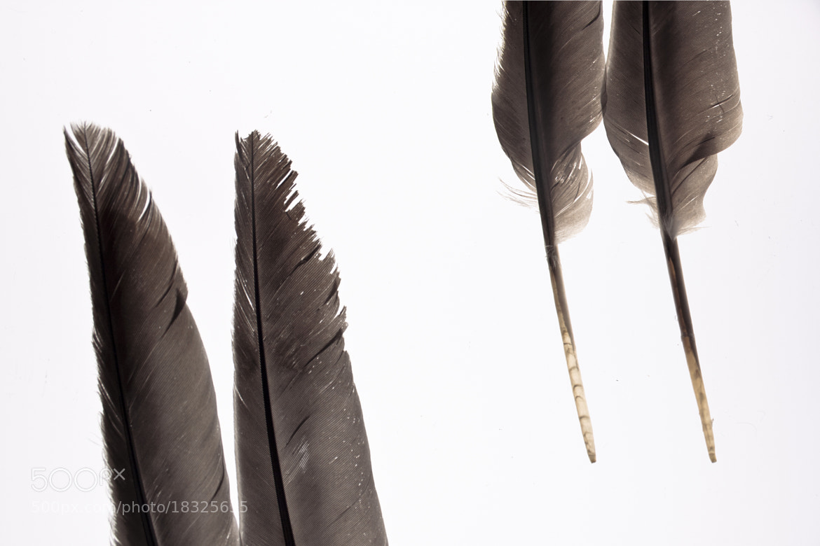 Photograph El misterio de las plumas by Jennifer Carmona Chacón on 500px