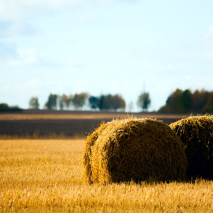 Straw in the field, Canon EOS-1D MARK II N, Canon EF 70-200mm f/2.8 L