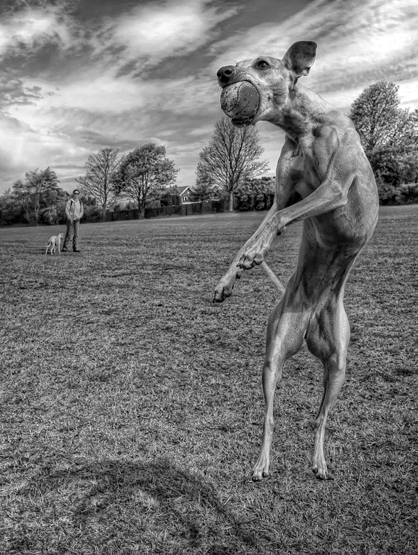 Photograph Air Dog by Hot Dog Photography on 500px