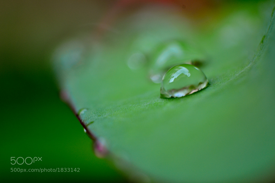Photograph rain drops on a leaf.. by Rakesh B S on 500px