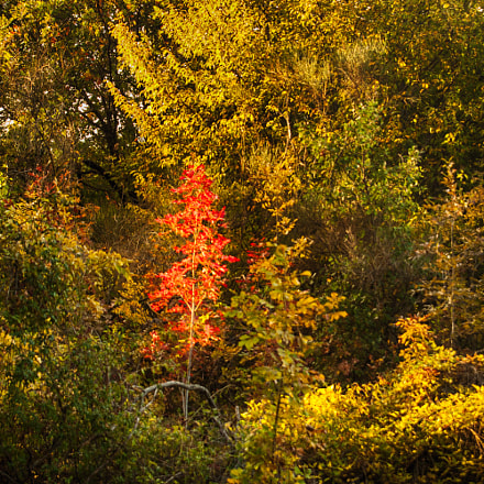 Red Fall ..., Nikon D70, Sigma 28-200mm F3.5-5.6 Compact Aspherical Hyperzoom Macro