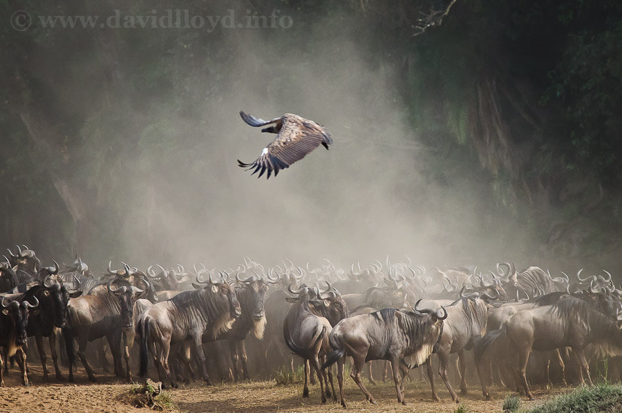Photograph Mara River Flyby I by David Lloyd on 500px