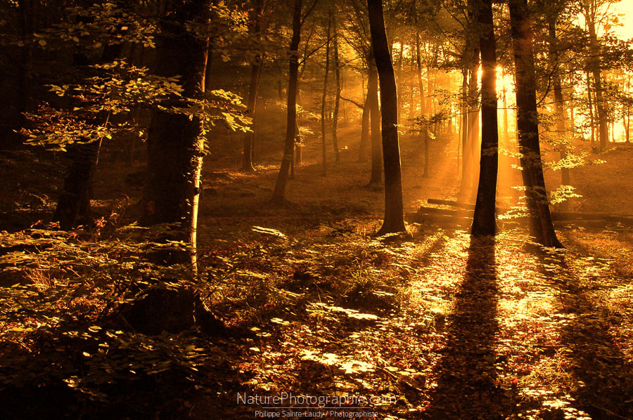 Photograph Forest in the Morning by Philippe Sainte-Laudy on 500px