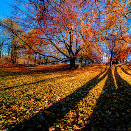 Beautiful Autumn colors in Ringve Botanical Garden Trondheim