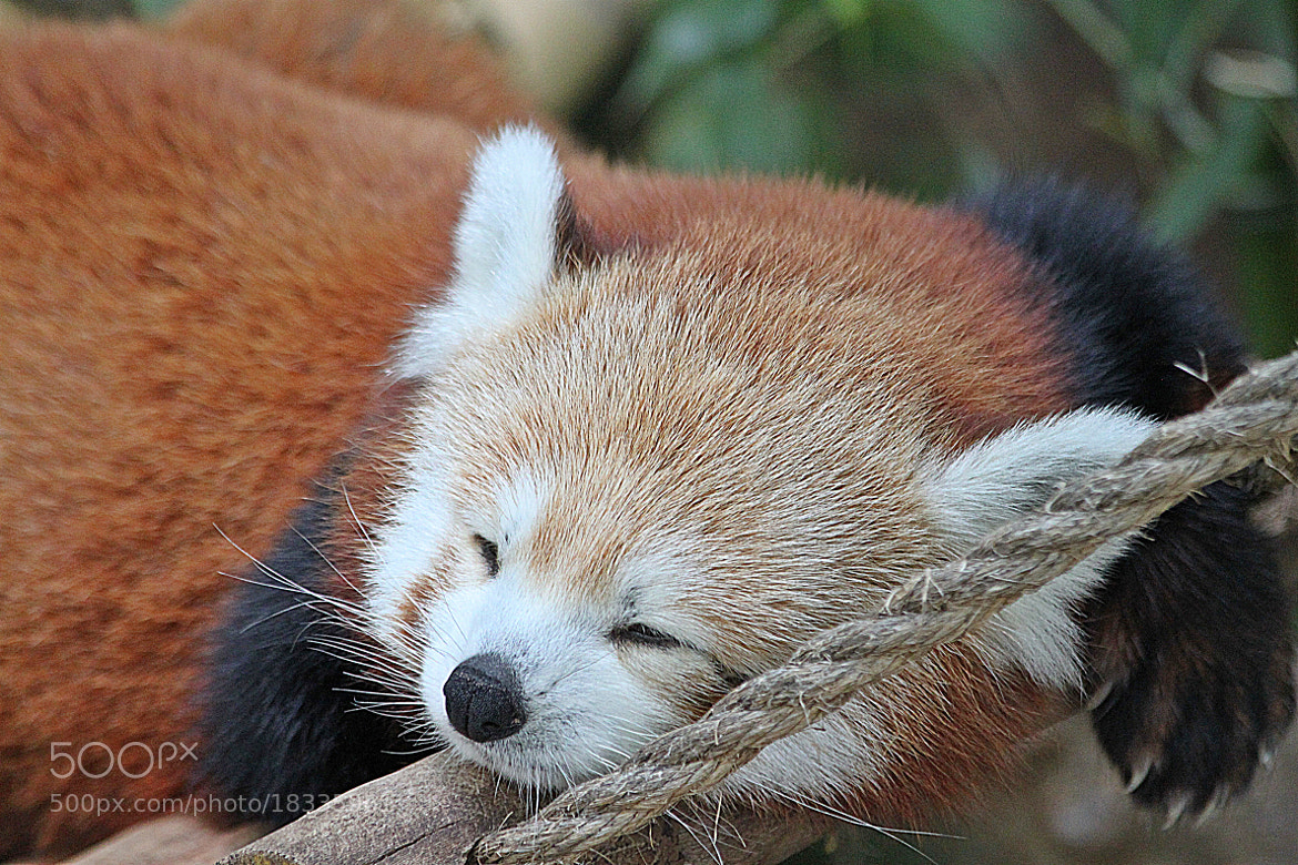 Photograph Please, don't wake me up........... by michelle phenix on 500px