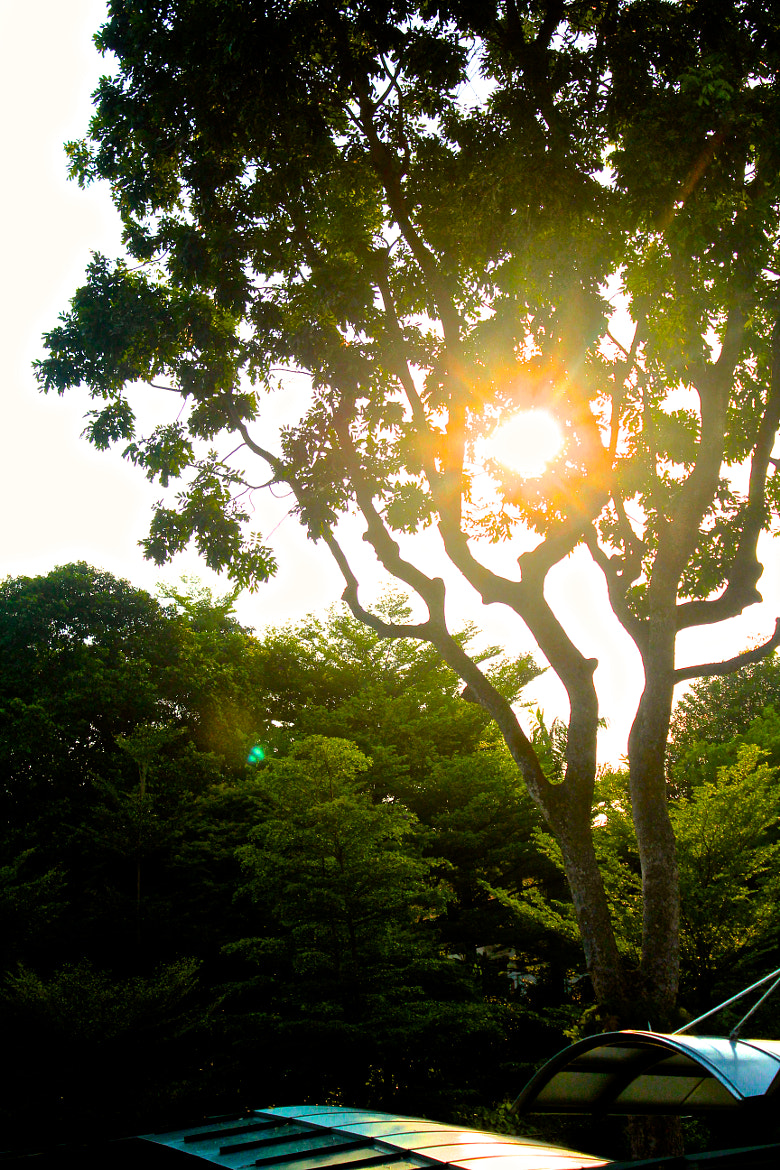Photograph tree sunshine by jo in on 500px