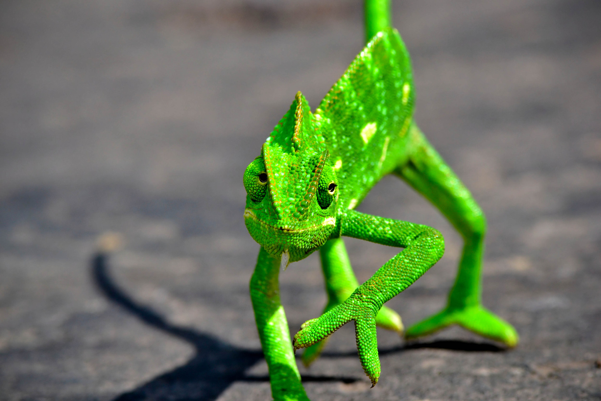Photograph Chameleon by Geet Tryambake on 500px