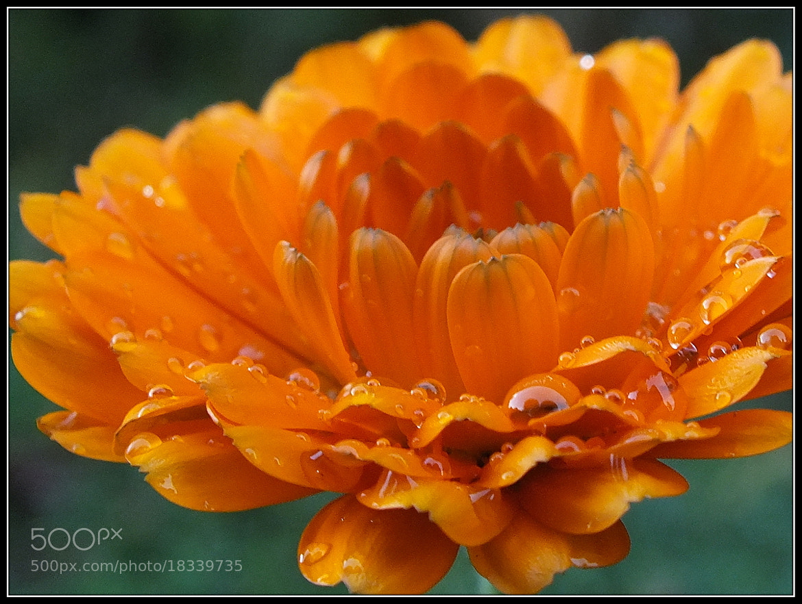 Photograph Orange Crush by H. Becker on 500px