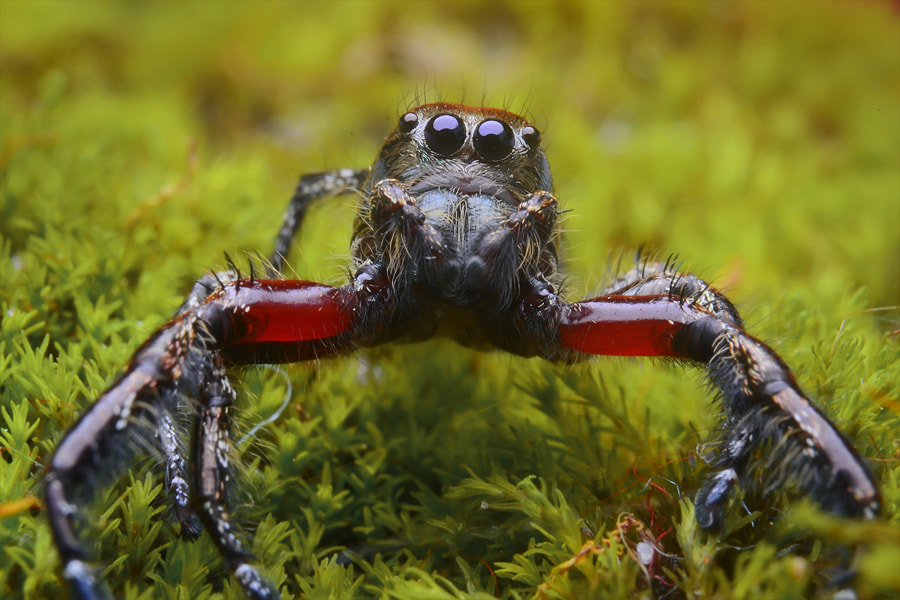 Photograph kungfu spider by Tele Nicotin on 500px
