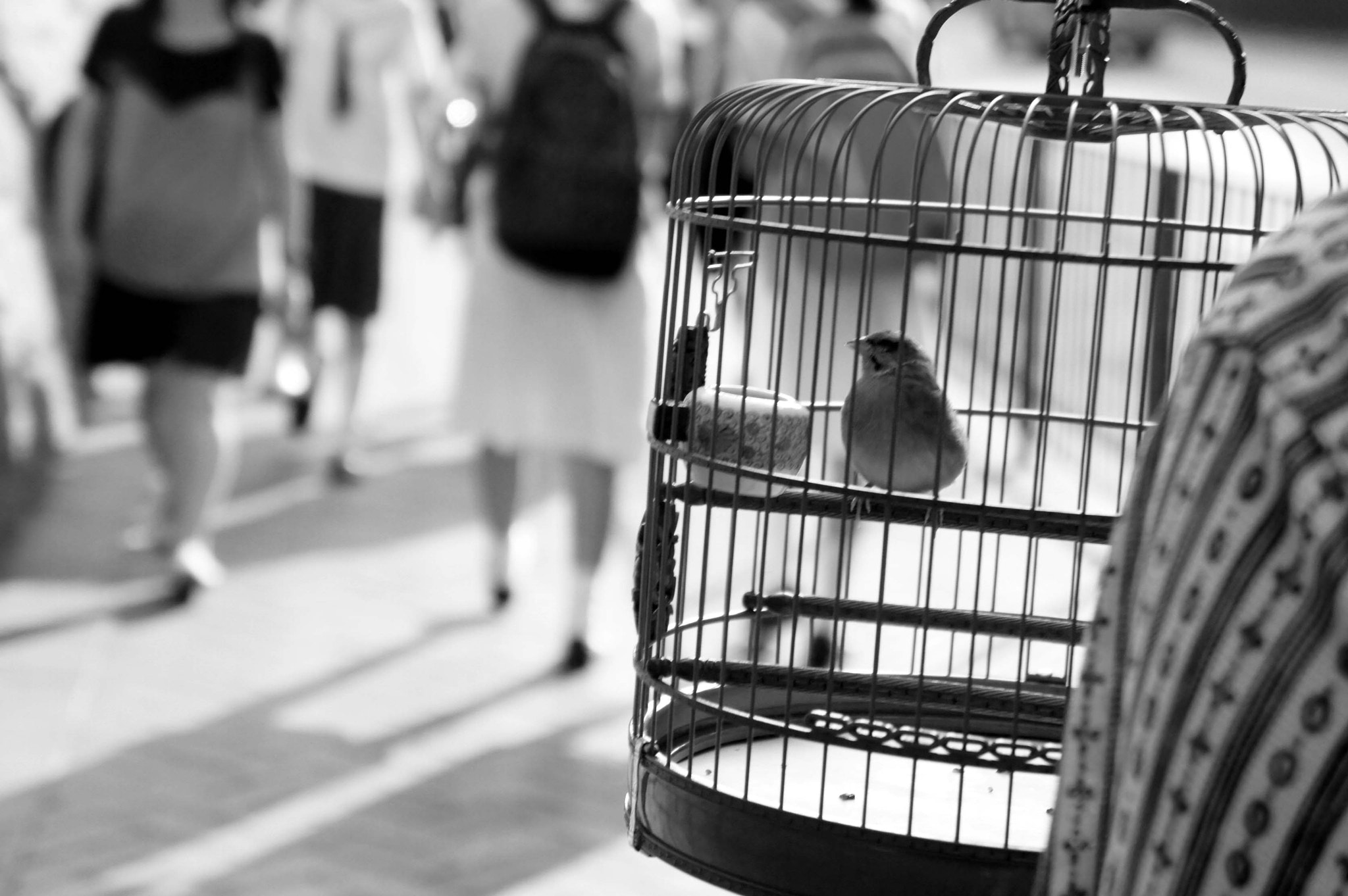 Photograph going for a stroll with pet! by Wayne Hor on 500px