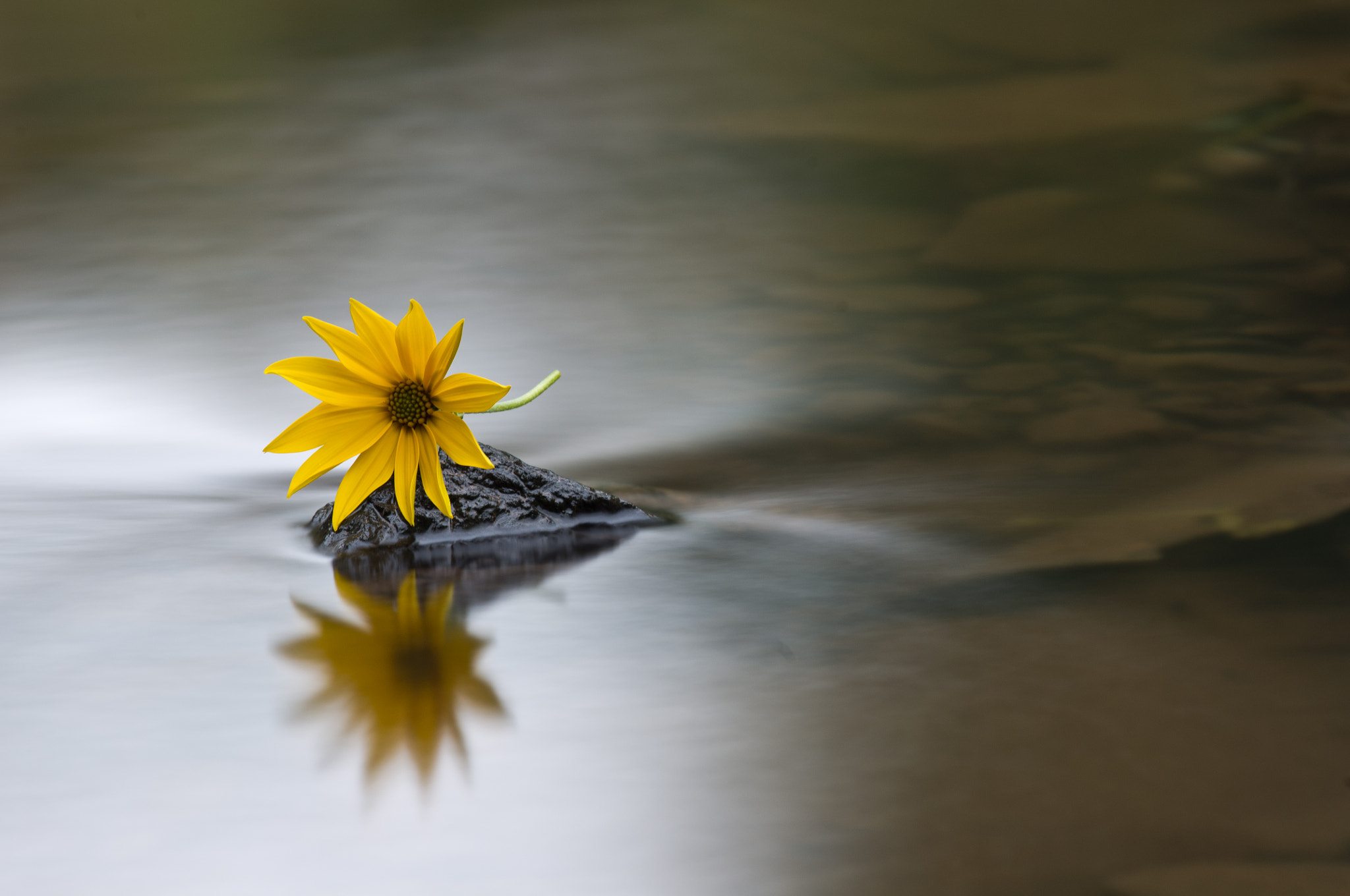 Photograph Flowery Reflection by Philipp Burgkart on 500px