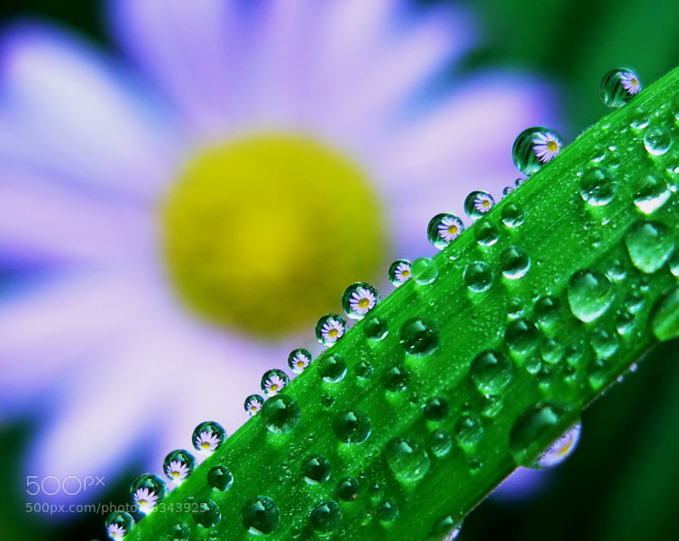 Photograph dew drop reflections by tugba kiper on 500px