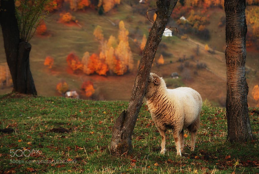 Photograph l by belu gheorghe on 500px