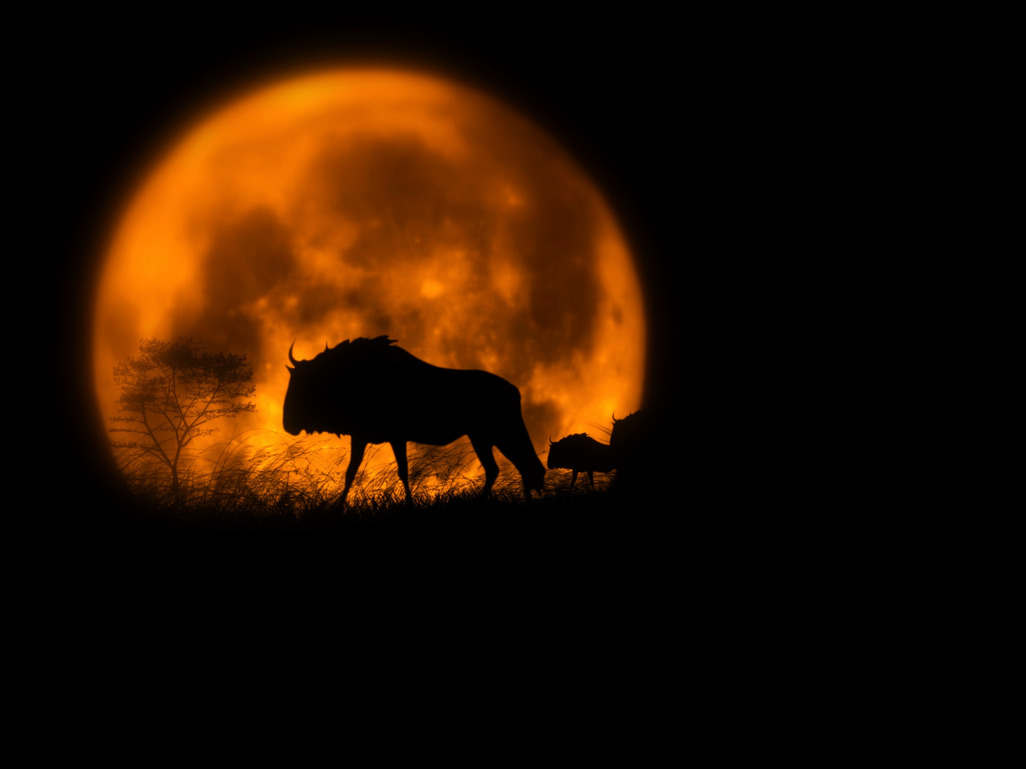 Photograph The great migration by Schipor Catalin on 500px