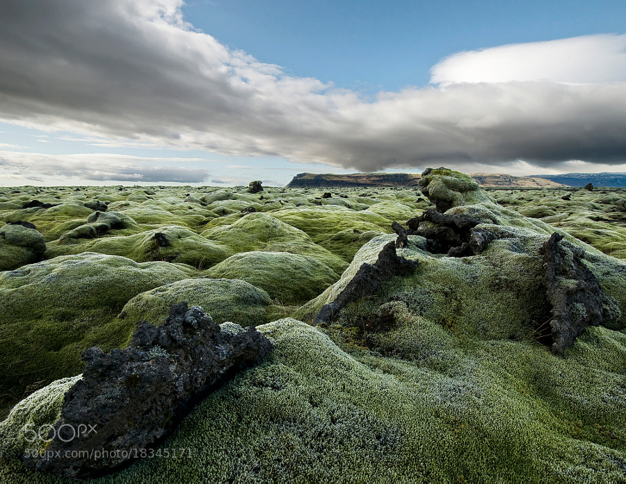 Photograph Woolly Fringe Moss by Daniel Bosma on 500px