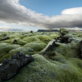 Woolly Fringe Moss by Daniel Bosma (Daniel_Bosma)) on 500px.com