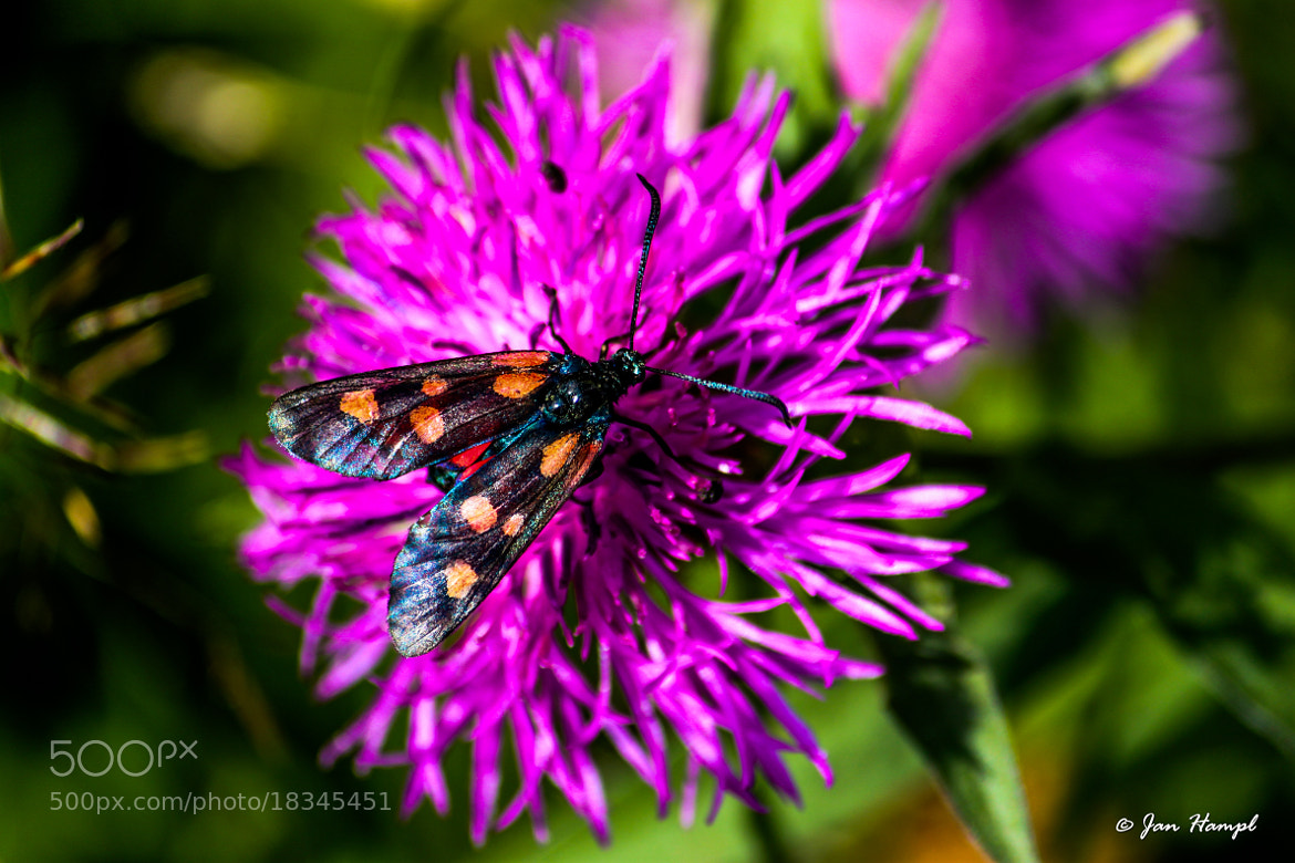Photograph Sitting on the flower by Jan Hampl on 500px