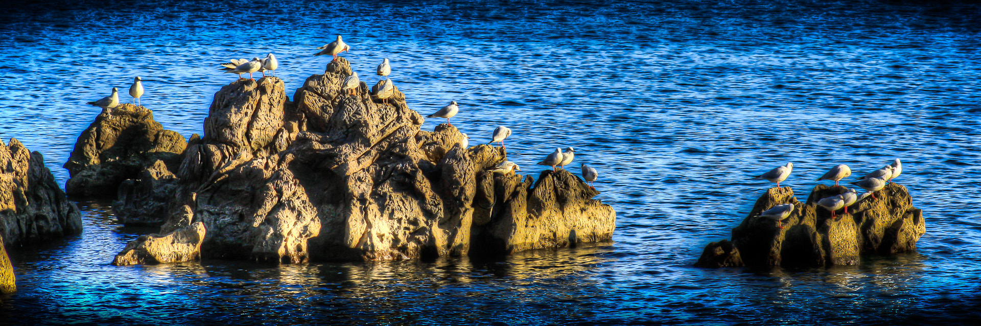 Photograph Gull Invasion by Daniel Troha on 500px