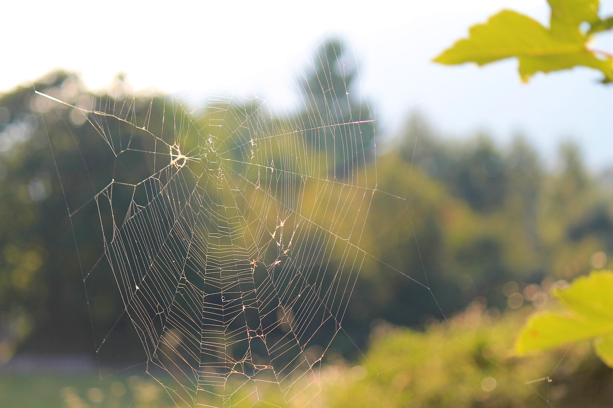 Photograph Spider web by Alessandro Faggioli on 500px