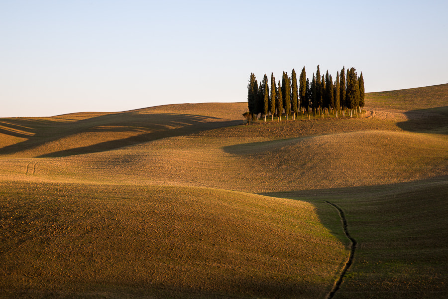 This photo was taken after the November 2012 photo workshop in Tuscany had ended and 5 participants staying an extra day were joining me on a shoot which included this iconic location just outside of San Quirico. The picture was taken a few minutes before the sun disappeared under the hills at Montalcino.