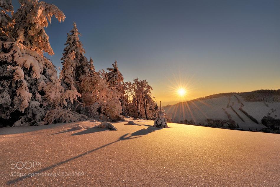 Photograph Small Conifer... by Pawel Kucharski on 500px