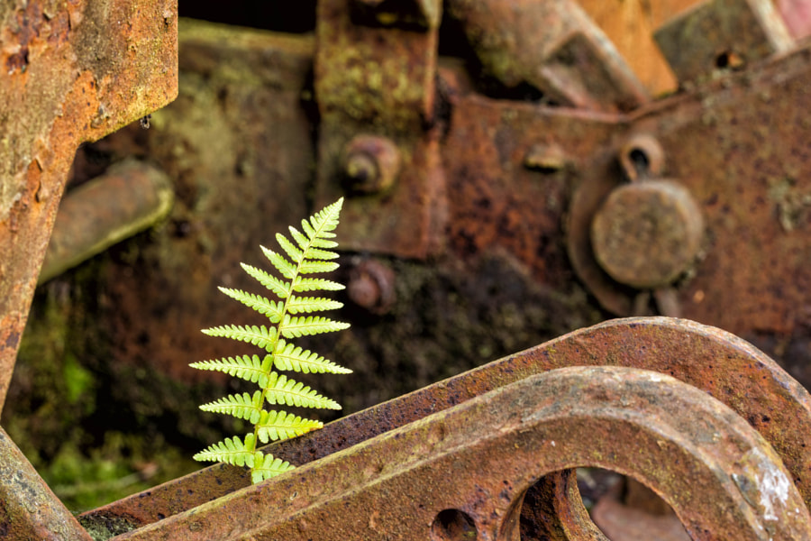 Bracken and rust