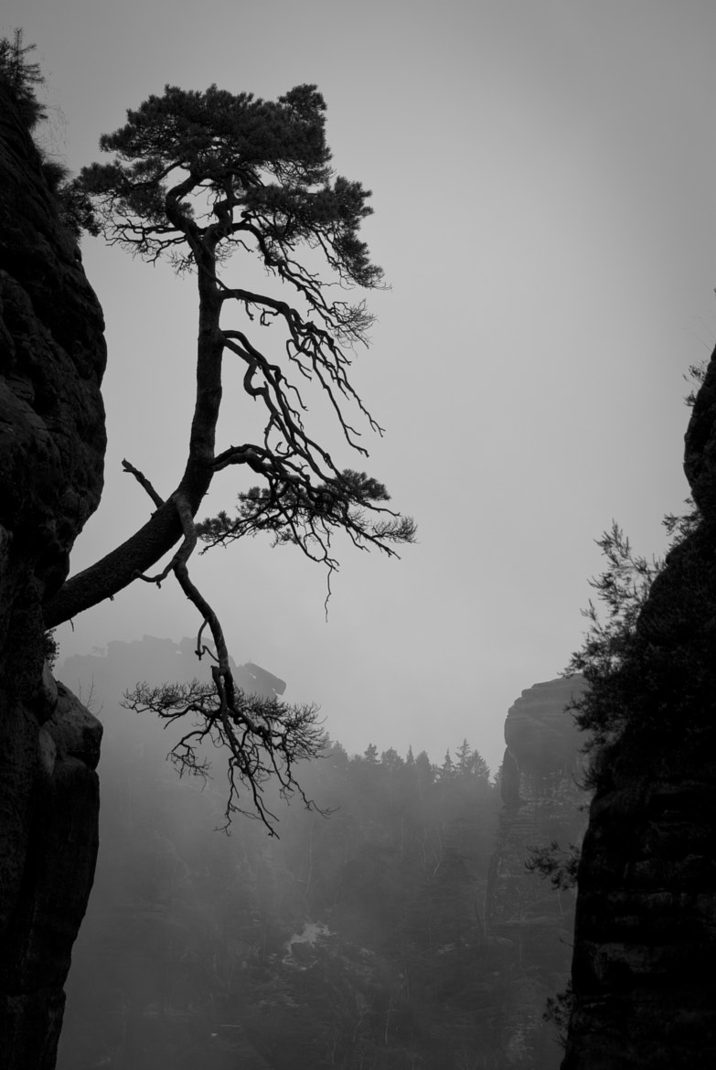 Photograph Saxon Switzerland I by Oliver Westphal on 500px